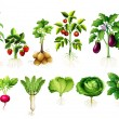 Many kind of vegetables with leaves and roots illu...