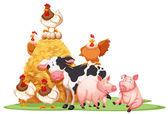 Hospodářská zvířata s kupce sena