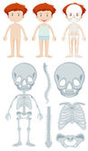 Anatomy of little boy illustration