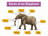 Different parts of wild elephant
