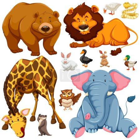 Photo pour Illustration des différents types d'animaux sauvages - image libre de droit