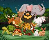 Different types of wild animals in park