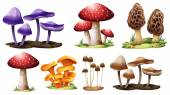 Illustration of the different types of mushrooms on a white background