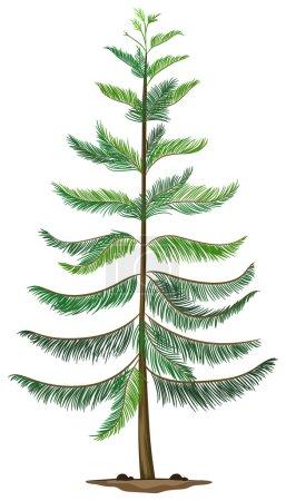 A Norfolk island pine