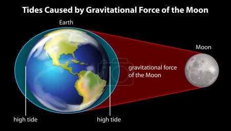 Illustration for Tides caused by the gravitational force of the moon on a black background - Royalty Free Image