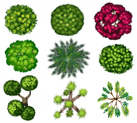 Illustration for Six different tree top view on a white background - Royalty Free Image