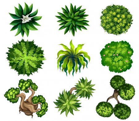 Illustration for Topview of the different plants on a white background - Royalty Free Image