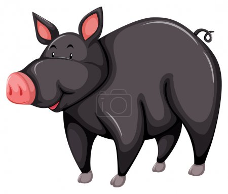 Porc gris