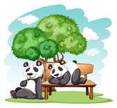 Panda bears relaxing at the park on a white background