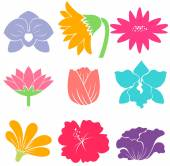Pastel color flower designs on white background