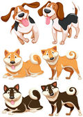 Set of different breeds of dog