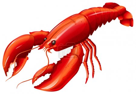 Single red lobster with two claws...