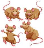 Brown Ratte in verschiedenen Posen