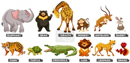 Illustration for Wild animals in many types illustration - Royalty Free Image