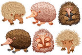 Brown and pink echidnas on white	 illustration