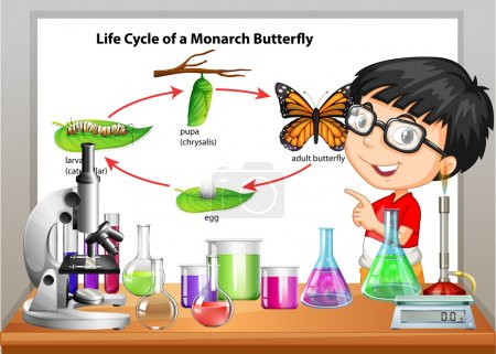 Photo for Boy presenting life cycle of butterfly illustration - Royalty Free Image