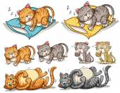Cat in different actions