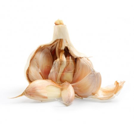 The Garlic (Allium sativum)