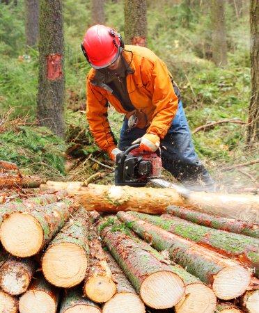 Photo pour Le bûcheron travaillant dans une forêt avec la scie - image libre de droit