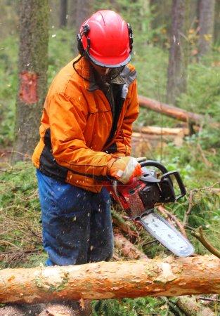 Photo pour Le bûcheron travaillant dans une forêt avec scie - image libre de droit