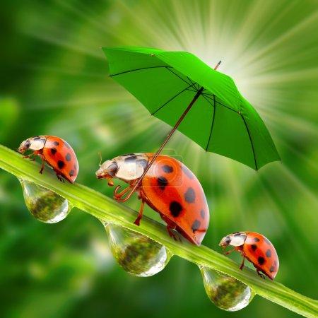 Little ladybugs with umbrella