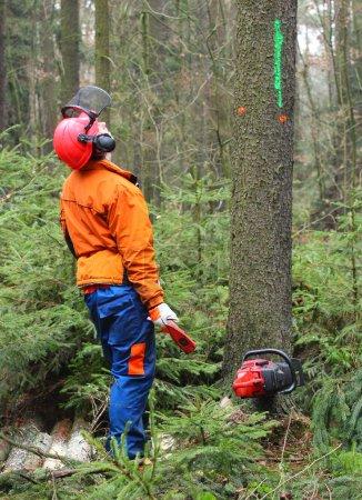 Photo pour Vue du bûcheron travaillant dans une forêt . - image libre de droit
