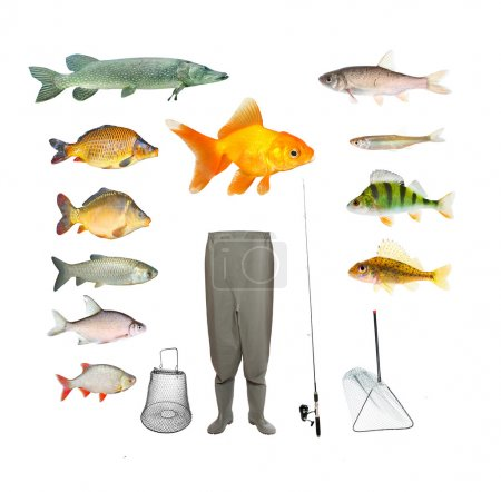 Fish and fishing tackle.