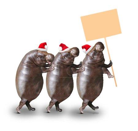 Three drunken hippos