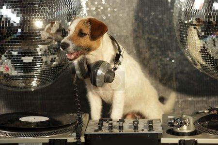 Foto de Un lindo gato russell perro djing en un disco ajuste - Imagen libre de derechos