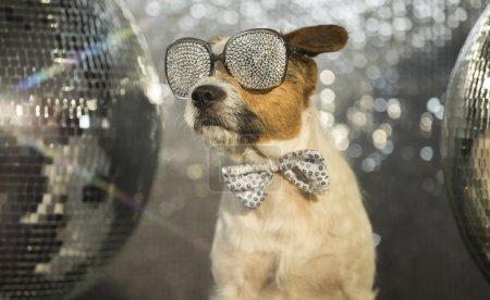 dog disco animal fun