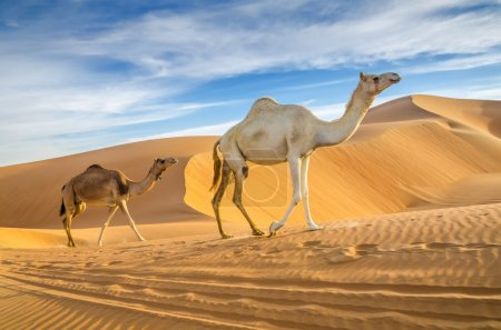 Photo for Taken in the Liwa Oasis, Abu Dhabi area, United Arab Emirates - Royalty Free Image