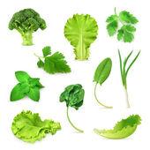 Grüne Gemüse und Kräuter-Set, Bio-vegetarische Nahrung, Vektor