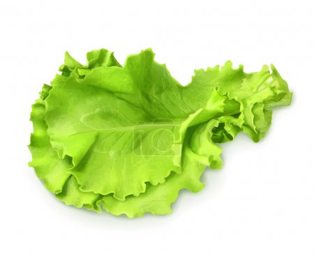 Fresh green leaf of lettuce, vector illustration...