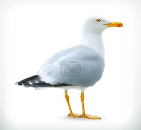 Seagull Illustration icon