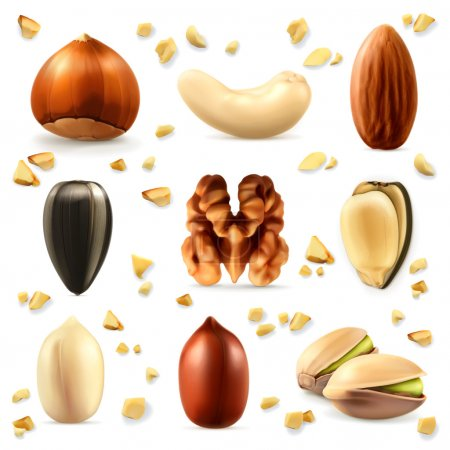 Set with nuts icons