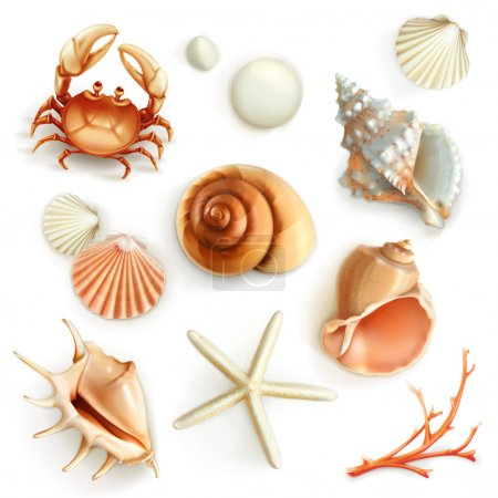 Set with seashells icons