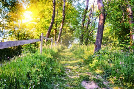 Photo for Beautiful summer landscape with country road - Royalty Free Image