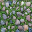 Green grass growing through the cobbled pavement i...