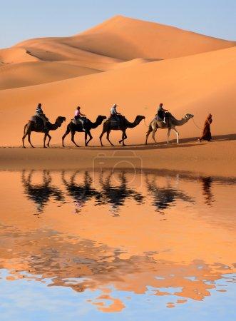 Photo pour Caravane de chameaux longeant le lac le Maroc désert, sahara. - image libre de droit