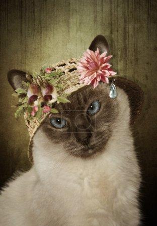 Siamese Cat in a straw hat