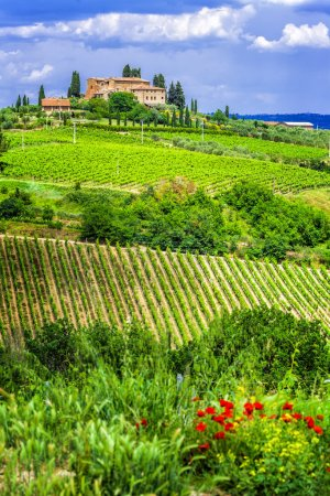 wineyards of Tuscany, Italy