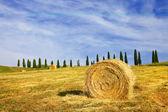 paysages ruraux picturales de la Toscane, Italie