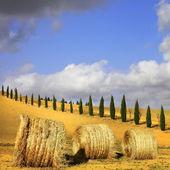 golden hills of Tuscany. Italian landscapes