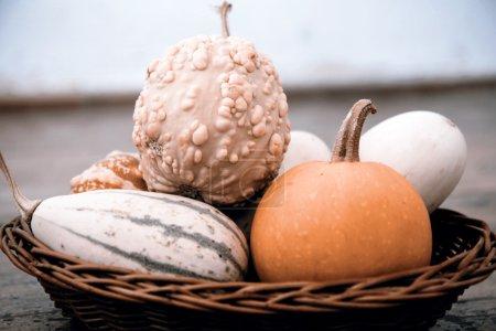 pumpkins in the basket
