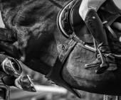 Pferd springen Wettbewerb