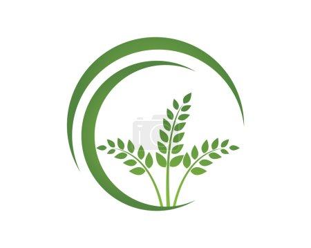 eco green rice