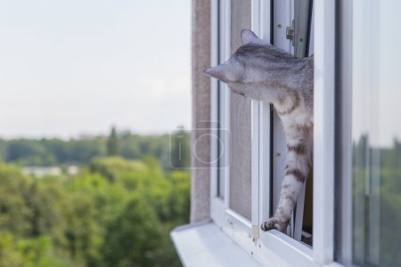 cat peeking out of the window