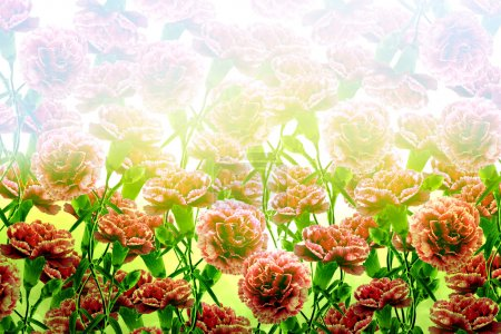 Background of flowers carnation
