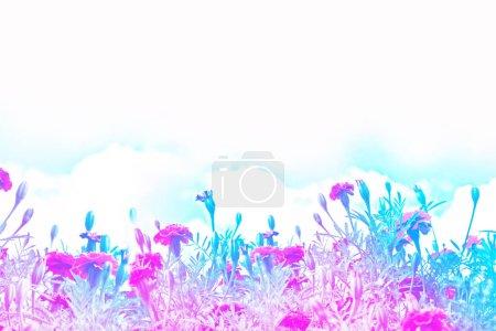 Photo pour Focalisation sélective. Fleurs de chrysanthème colorées sur un fond de paysage automnal. prairie floraison - image libre de droit