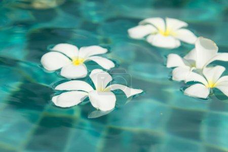 Photo pour De belles fleurs tropicales nagent dans la piscine avec de l'eau bleue - image libre de droit